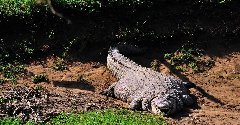 A very fat nile crocodile basking in the sun | © Steve Slater/Flickr