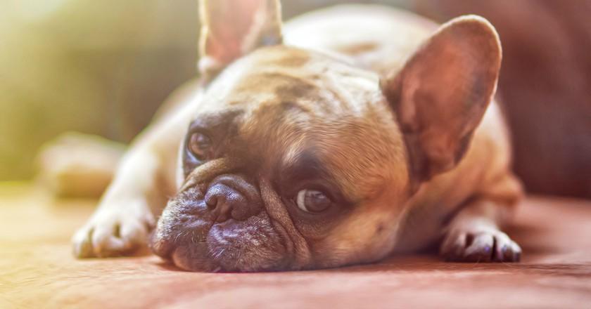 Dog|©lightstargod/Pixabay
