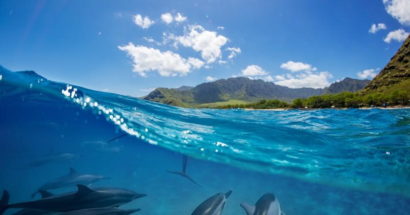 Island life   © Willyam Bradberry/Shutterstock