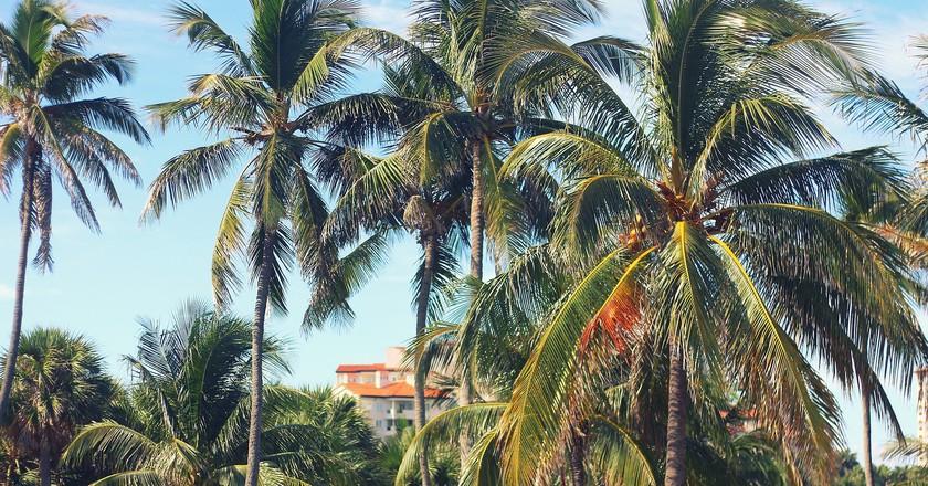 Suburbs of Miami | Public Domain \ Pixabay