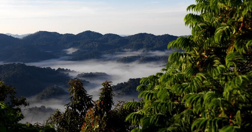 Rwanda's impressive Nyungwe National Park