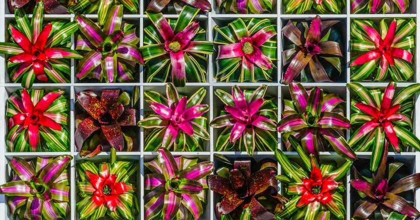 Bromeliad Square | Photo by Darren Erickson | Courtesy Marie Selby Botanical Gardens