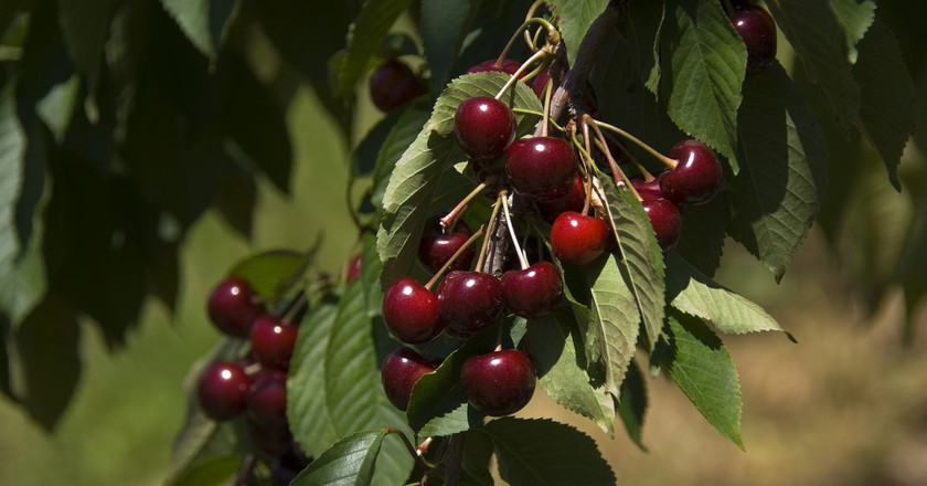 Michigan cherries | © Jim Sorbie / Flickr