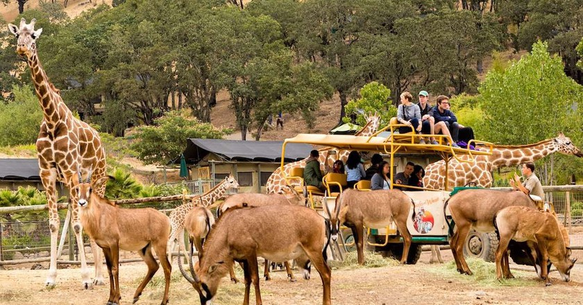 Visitors and animals at Safari West wildlife preserve in Santa Rosa, CA