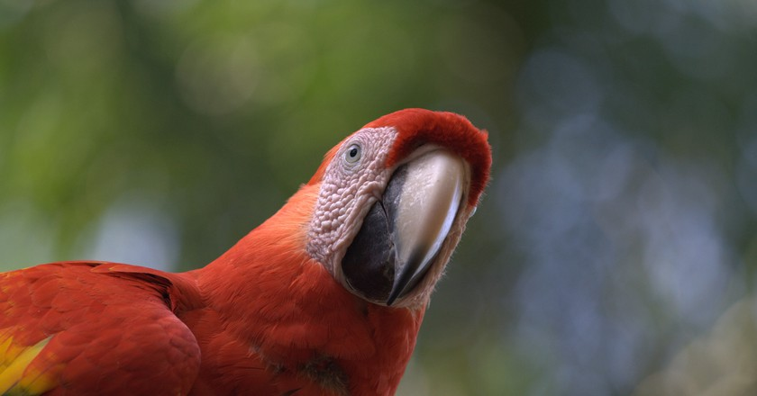 Macaws are a common sight in Honduras