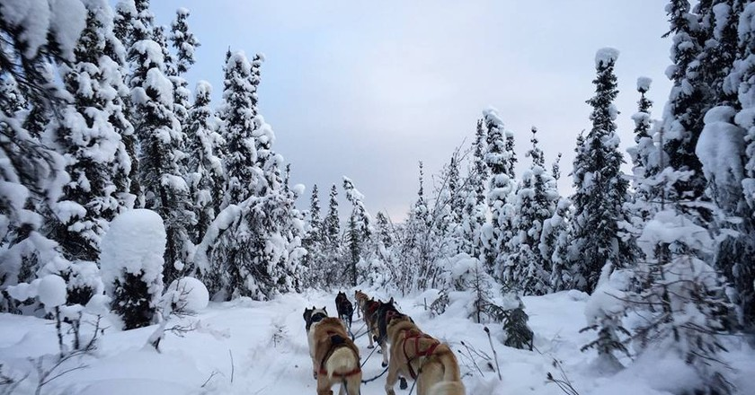 Dog sledding through the Alaskan wilderness