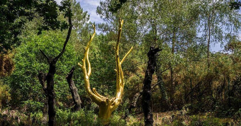 The mythical forest of Brocéliande