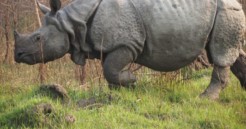 One-horned rhinoceros can be seen at the Chitwan National Park