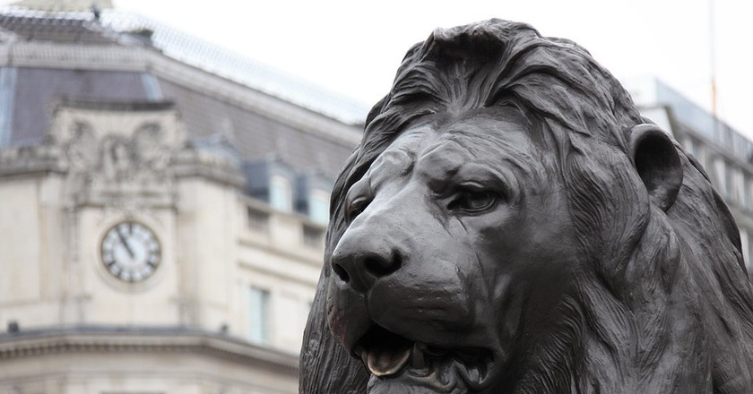 One of the most famous examples of an English lion in Trafalgar Square