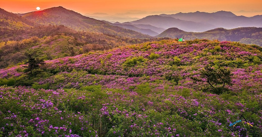 China in Bloom: Footage Captures Stunning Sights of China's Flower Blossoms