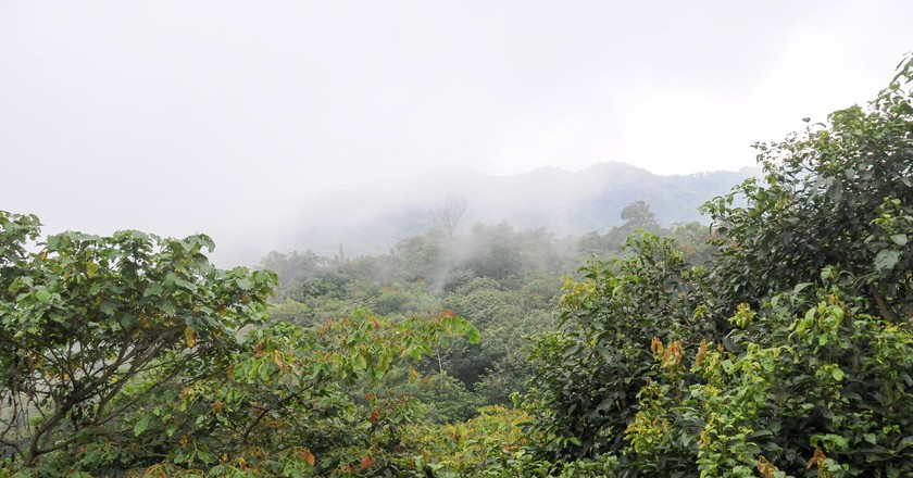 A cloud forest in Cuetzalán