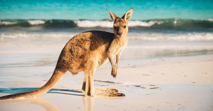 Take Our Quiz and Discover Your Perfect Trip to Australia