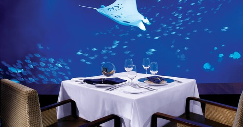 Watch aquatic animals swim past while feasting on dinner