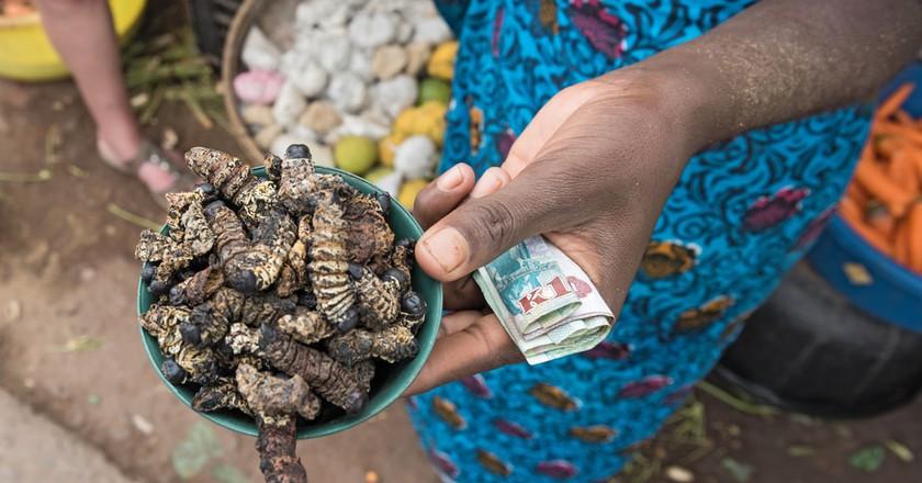 Caterpillars are a popular delicacy in Zambia
