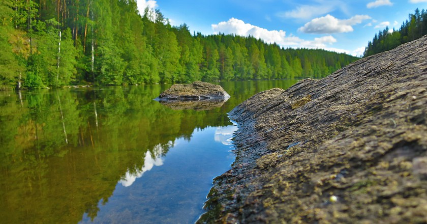 The beautiful forests provide plenty of vegetarian ingredients in Kuopio.