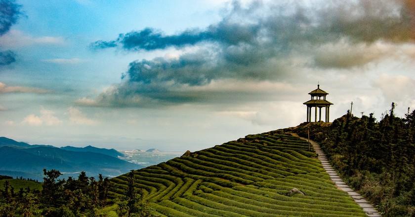 Chinese Tea Fields   © Jakob Montrasio / Flickr