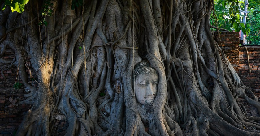 The head in the roots