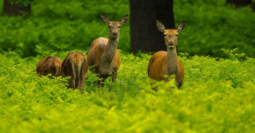 Deer family in the forest