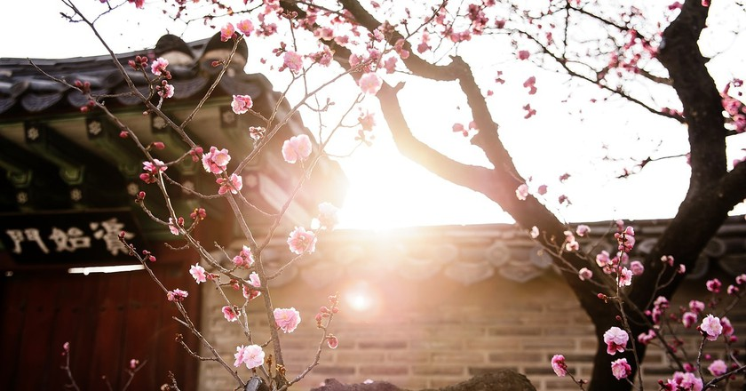 The Most Beautiful Places To Visit In South Korea In The Spring