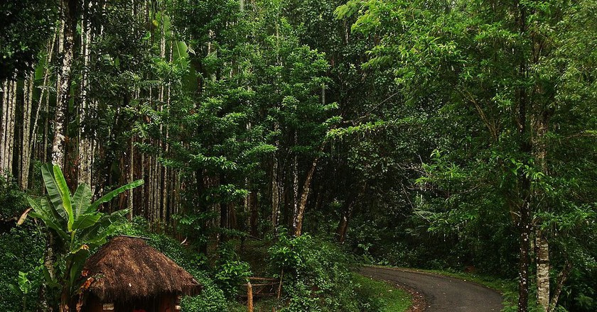 Agumbe is home to one of the few rainforests in India   © Shyam Siddarth / WikiCommons