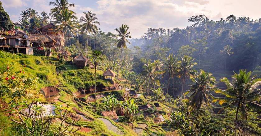 Rice Terrace In Ubud Bali Indonesia