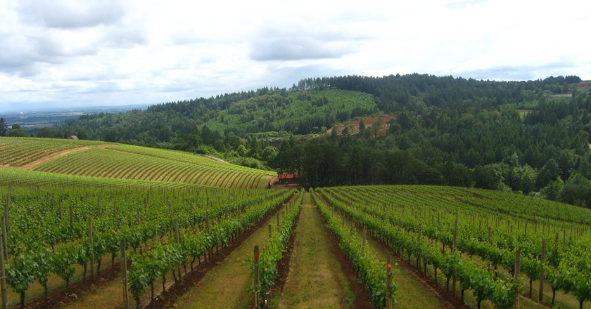 The Willamette Valley is the largest wine region in all of Oregon