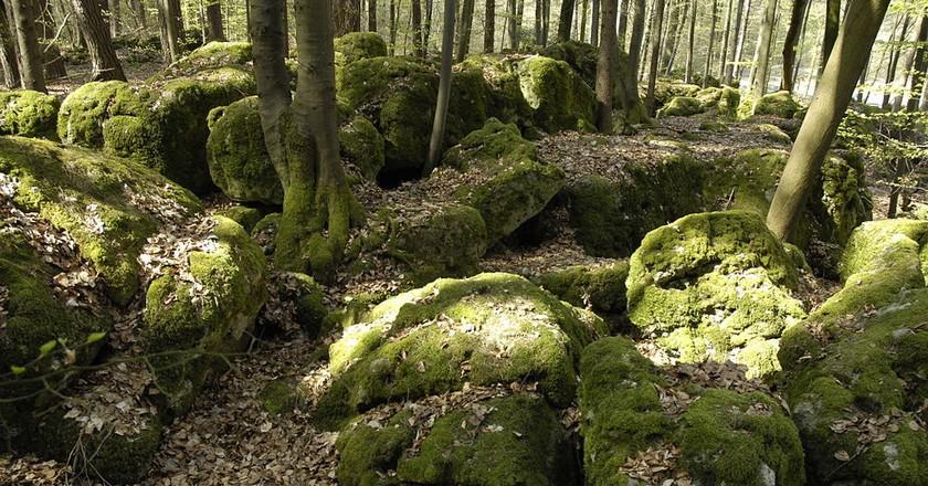 Druidenhain forest