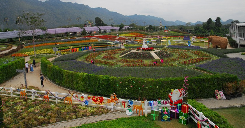 One of Nakhon Ratchasima's many flowery farms   © Thanate Tan / Flickr