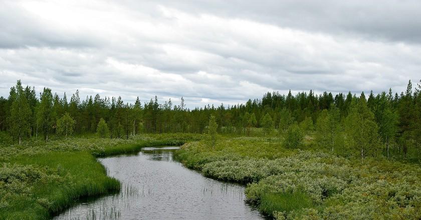 Find great dishes from fresh Lappish ingredients at Rovaniemi restaurants