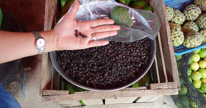 Hormigas culonas are roasted, sprinkled with salt and sold in small plastic bags in markets and small tiendas