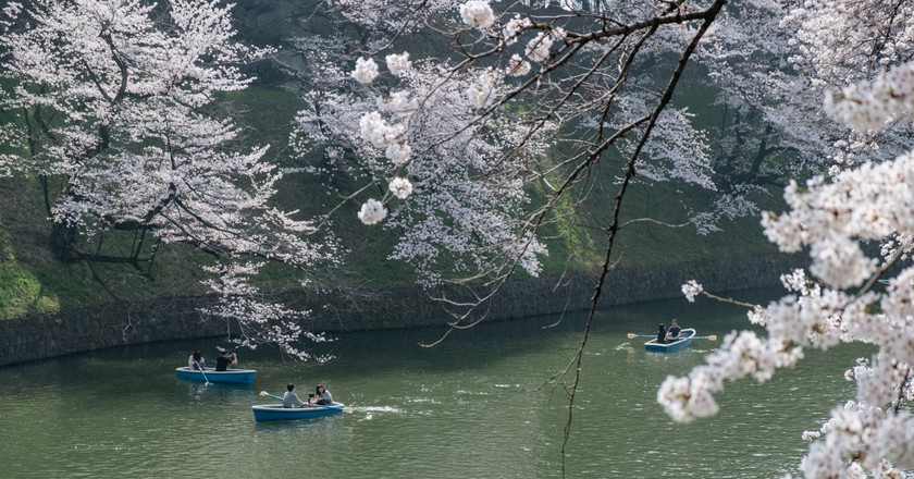 The Ultimate Way to Experience Japanese Cherry Blossoms