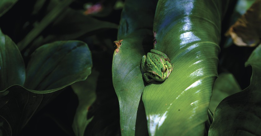 Frog on the Cape to Cape trail