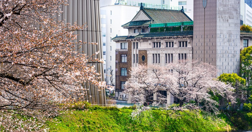 Tokyo looks beautiful in the spring