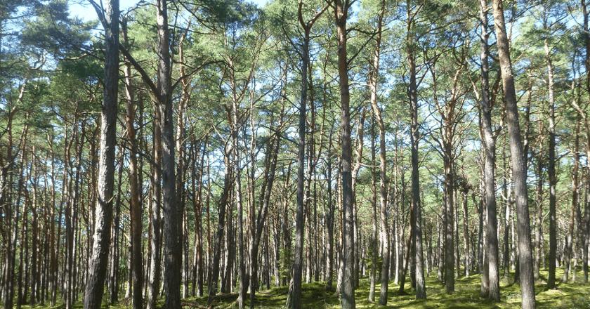 Łeba | © Northern Irishman in Poland