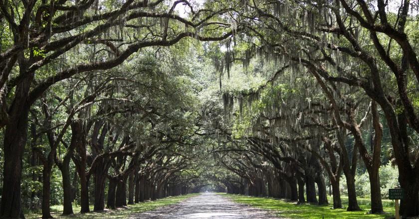 Savannah, Georgia | © zauberfrau_1962/Pixabay