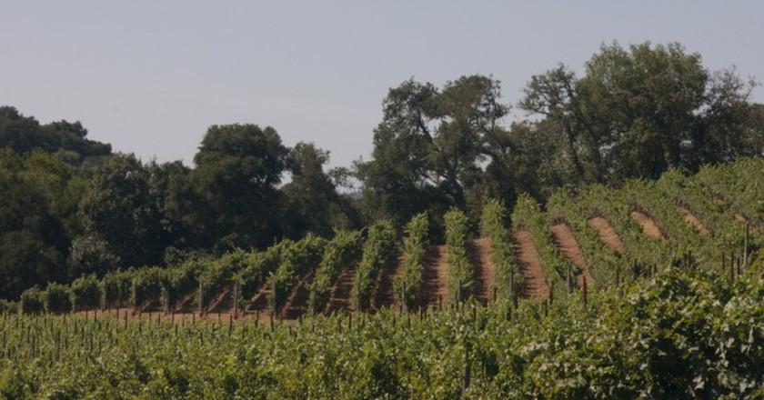 Vineyards in Sonoma | ©Sarah/Flickr