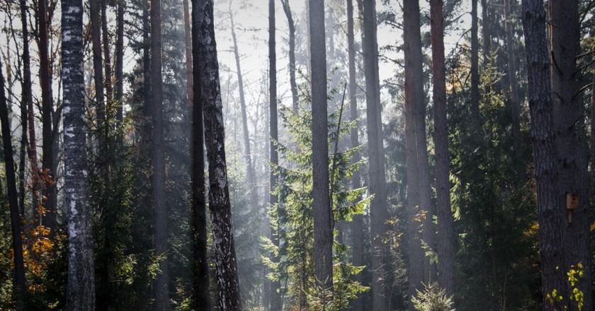 Białowieża | © Marc Veraart/Flickr