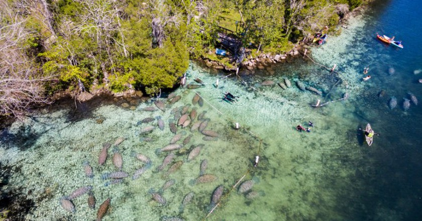 Swimming with manatees at Crystal River, FL