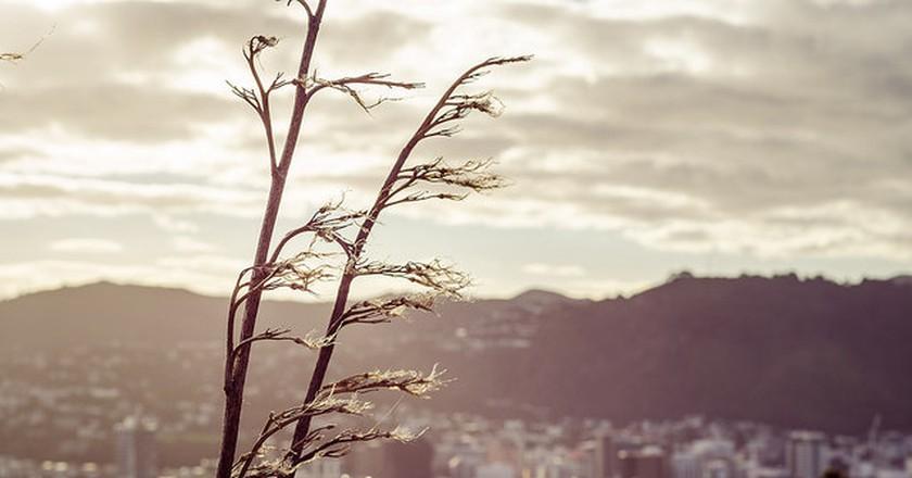 Wellington I © Allan Bergman/Flickr