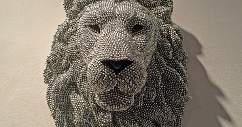 Photo of Lion   © Benita Gingerella