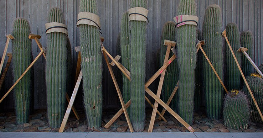 Cacti Installation at Scottsdale Museum of the West | ©vistavision/Flickr