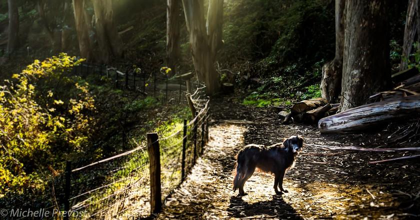 Stern Grove I ©Shelly Prevost/Flickr