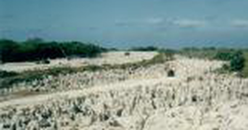 The True Story Behind The Environmental Degradation Of Nauru
