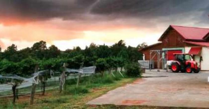 The 10 Most Beautiful Vineyards In North Carolina
