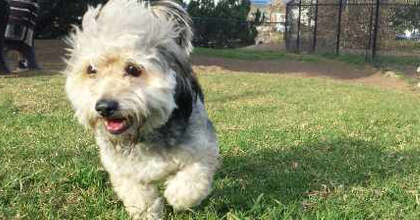 The Top Dog-Friendly Spots To Visit In Los Angeles