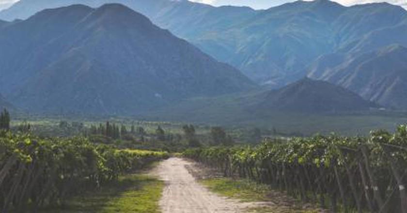 The Best Vineyards in Salta, Argentina
