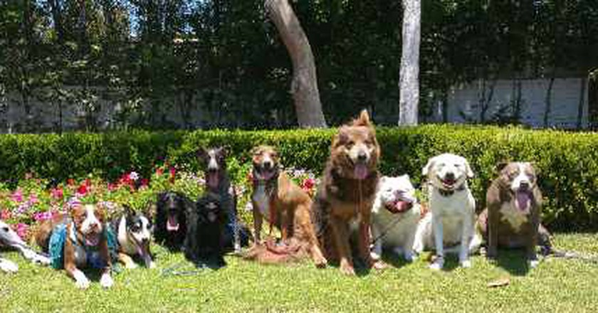 Check Out These Dog Walking Services In Los Angeles