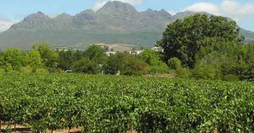 The Best Vineyards On The Cape, South Africa