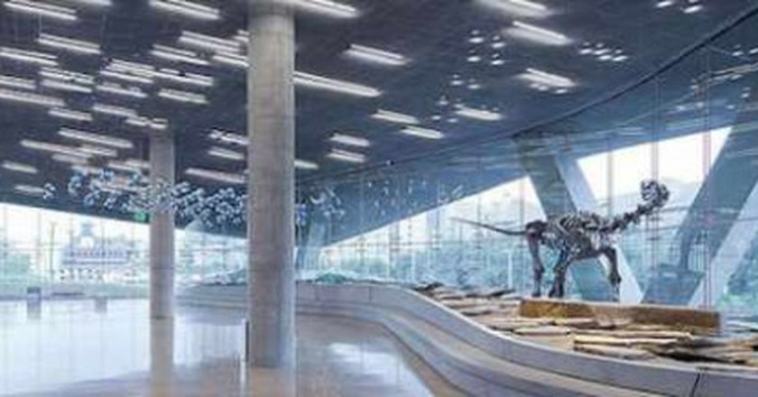 The Coolest Museums in Dallas You Should Visit