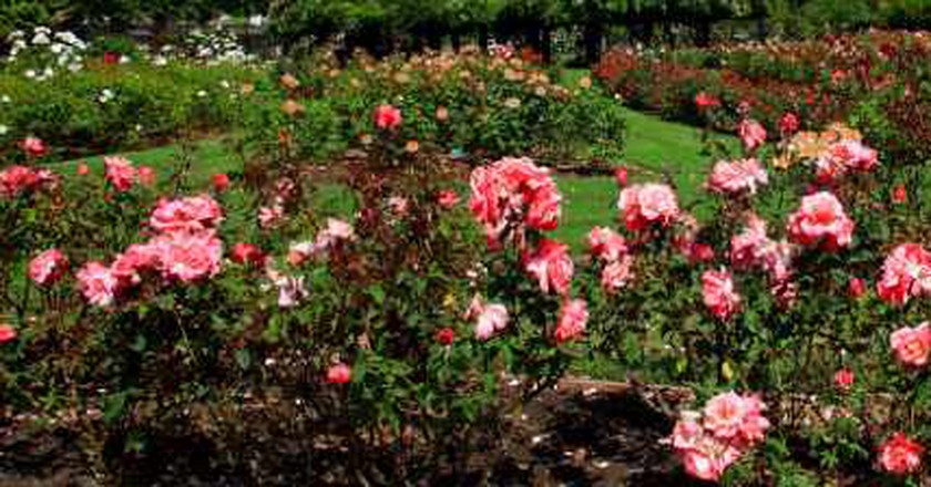 The Best Parks In San Jose, California